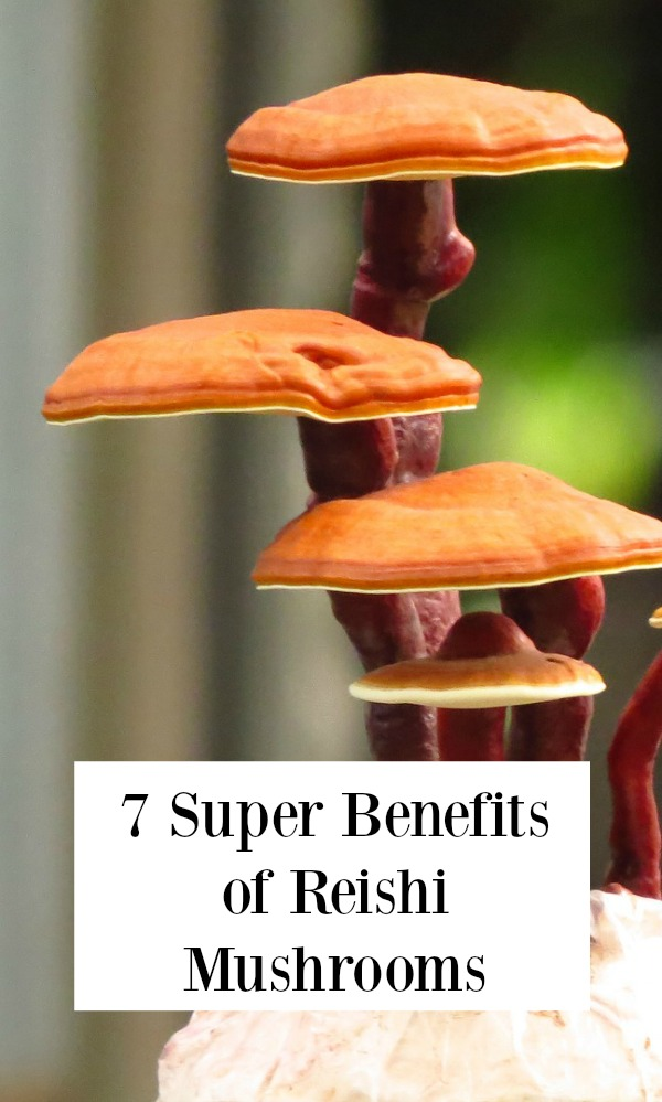Benefits of Reishi Mushrooms